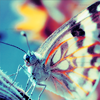 Blue tinted butterfly avatar