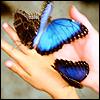 Butterflies avatar
