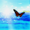 Butterfly Over Water avatar