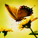 Butterfly With Flowers avatar