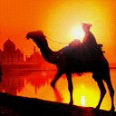 Camel Sunset avatar