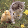 Baby Goose and Kitten 18 22 avatar