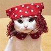 Cats avatars