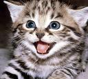 Kitty maowww