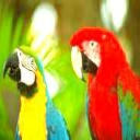 Two Macaws avatar