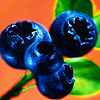 Blueberries 3 avatar