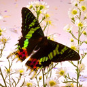 Butterfly among flowers avatar