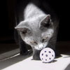Cat and a Ball avatar