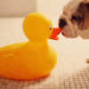 Dog and duck avatar