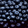 Blueberries avatar
