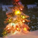 Christmas tree glow avatar
