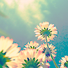 Summer flowers avatar